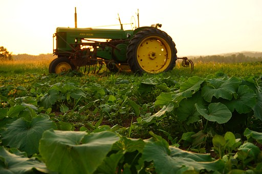 agriculture-1499424__340